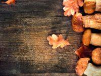 Tradiční houbové recepty