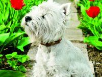 Pes v zahradě