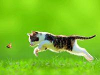Zajímavá fakta o kočkách