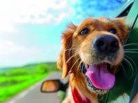 Se psem na dovolenou