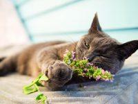Co kočky milují