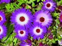 Neokoukané květiny do truhlíků