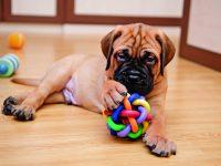 Jakou hračku vybrat psovi?