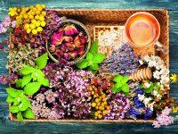 Vše, co potřebujete pro zdravé ledviny a měchýř