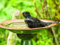 Pítka pro ptáky