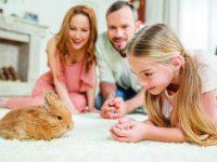 Králíček jako domácí mazlíček – zvažte dobře pro a proti
