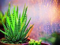 Co potřebují pokojové rostliny v zimě?