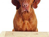 Nejčastější chyby při krmení psa