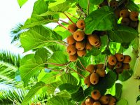 Ovoce a zelenina u pergoly