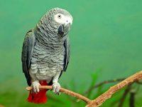 Chytrý jako… papoušek žako!