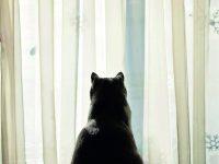 Kočka sama doma