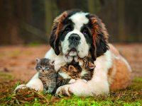 Kočka a pes v bytě? Jak je v klidu seznámit.