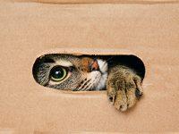Proč kočky milují krabice?