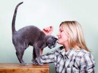 Rozumíte své kočce?