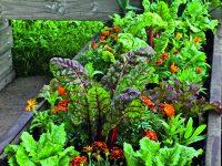 Vypěstujte si vlastní bio zeleninu