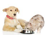 Cukrovka může trápit i psy a kočky