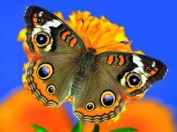 Pozvěte motýly do zahrady