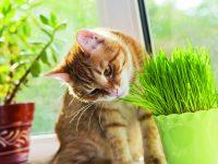 Proč kočky žerou trávu?