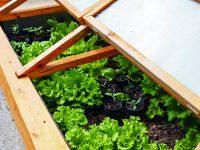 Jakou zeleninu pěstovat v pařeništi?