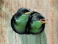 Domečky pro ptáky