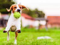 Tipy, jak zabavit zvíře venku