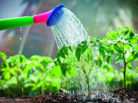Pěstujeme zeleninu – vysazujeme