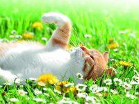 Tipy pro pohodové kočičí jaro