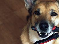 Jak psovi ostříhat drápy