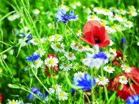 Jak založit rozkvetlou louku