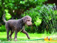 Zahrada pro psa