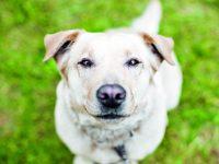 Co možná nevíte o psím čenichu
