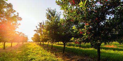 Prostor pro ovocné stromky