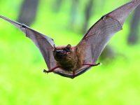 Zahrada pro netopýry