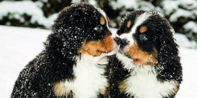 Zimní péče