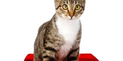 Proč kočka nepoužívá záchod?