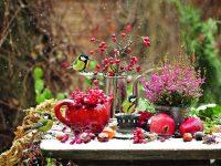 Dřeviny s krásnými plody