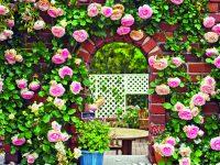 Fantastický svět růží