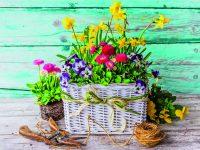 Jarní květinová inspirace