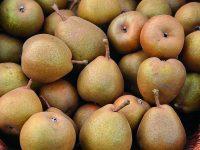 Staré odrůdy hrušní