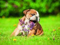 Psi na jaře a v létě – na co si dát pozor?