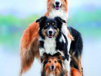 7 psích zajímavostí