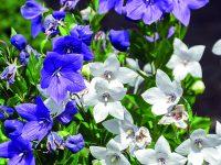 Trvalky pro vaši zahradu