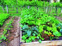 Jak na účinnou ochranu rostlin