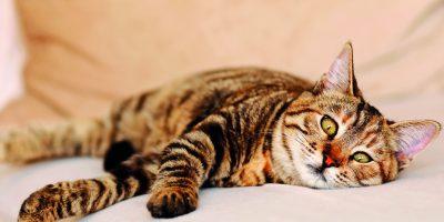 Kočičí problémy s močovými kameny