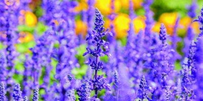 Květiny pro slunné záhony