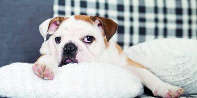 Trpí váš pes nadýmáním?