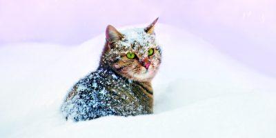 Rýma může potrápit i kočky