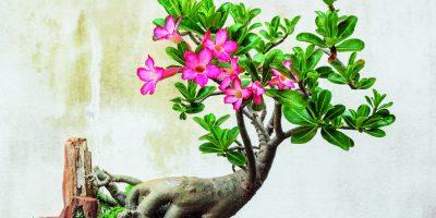 Exotické rostliny (nejen) na sváteční stůl