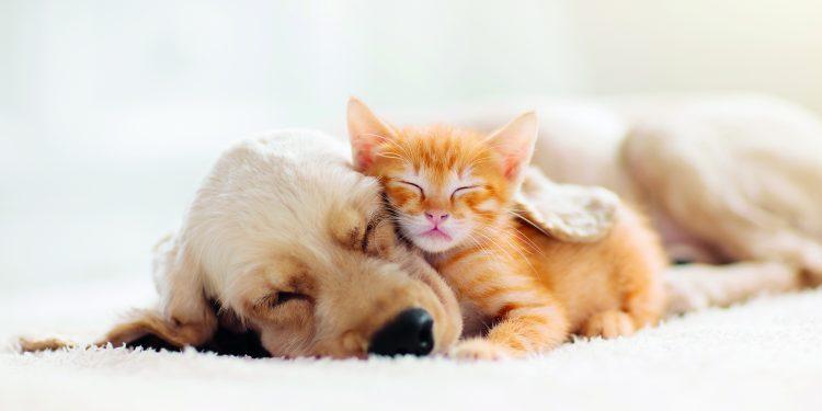 Pes a kočka v jedné domácnosti?