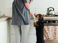 Pozor na psí mlsání